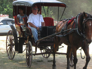 Horse and Buggy at Locust Grove